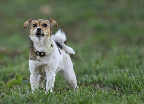 Summer or winter - carefree farm holidays in South Tyrol with your dog