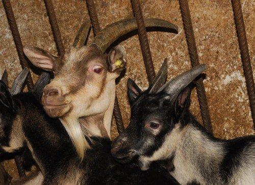 Animals up close at the farm
